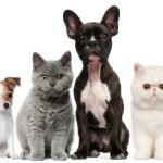 Pet Food To Maximize A Dog's Health