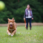 Dog Information: Is Your Dog Getting The Nutrition That He Needs?