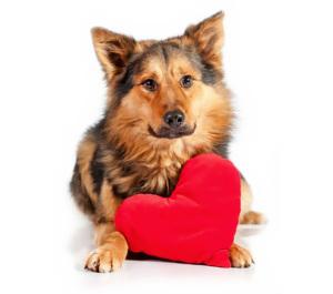 Dog Heart Murmur Symptoms