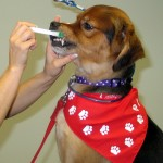 Regular Dental Examinations Provide Early Detection of Oral Tumors in Pets