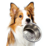 Dog Food You Make Yourself Using A Healthy Mix