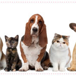 Pet Sitters Make Vacations Easier – for You and Your Pets!