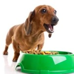 Dog Food Without the Fuss or the Mess