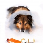 Side Effects of NSAIDs in Pets