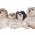 Natural Dog Food and Its Benefits to an Animal's Health