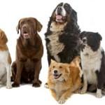 Relationship Between Dog Food and Dog Health