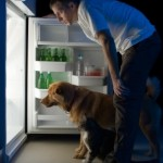 What Dog Obesity Can Tell Us About People