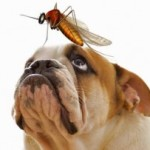 Heartworm Natural Prevention Tips That Can Help Save Your Pet's Life