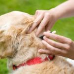 The Truth About Dog Flea Treatment Alternatives