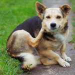 More Ideas for Dog Flea Treatment Alternatives