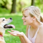 Finding Great Dog Food Recipes