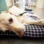 Kidney Failure in Dogs is a Serious Matter