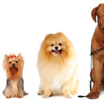 Helpful Tips on Worming Dogs