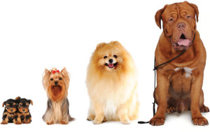 Worming Dogs