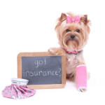 What About Pet Health Insurance?