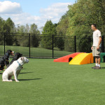 Benefits Of Dog Obedience Classes