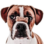 Dog Treats: Choosing Healthy Snacks That Your Dog Will Love