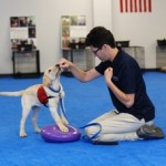 Puppy Training Classes