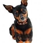 Comparing Dog Food Brands