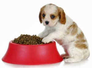 puppy_worming