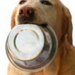 Dog Information on the Best Food Brands