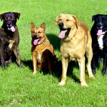 What We Can Learn From Our Dogs
