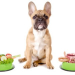 The Best Dog Food