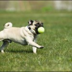 The Foundation For Good Dog Health