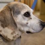 Dog Cancers